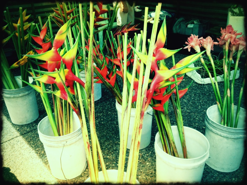 Parap Market Flowers with Ginger